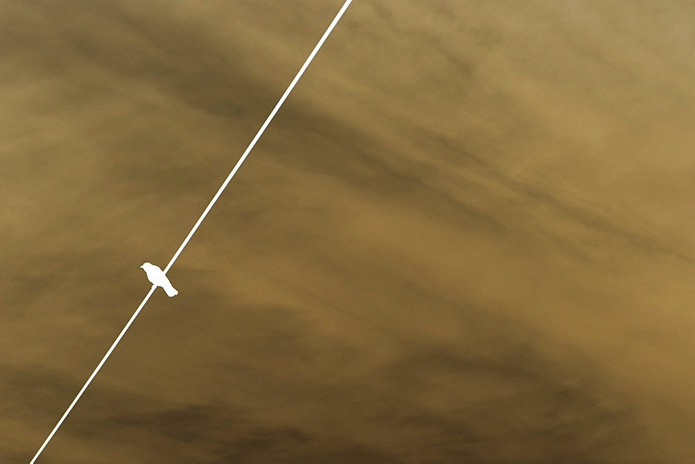 Low angle view of single bird on a wire.