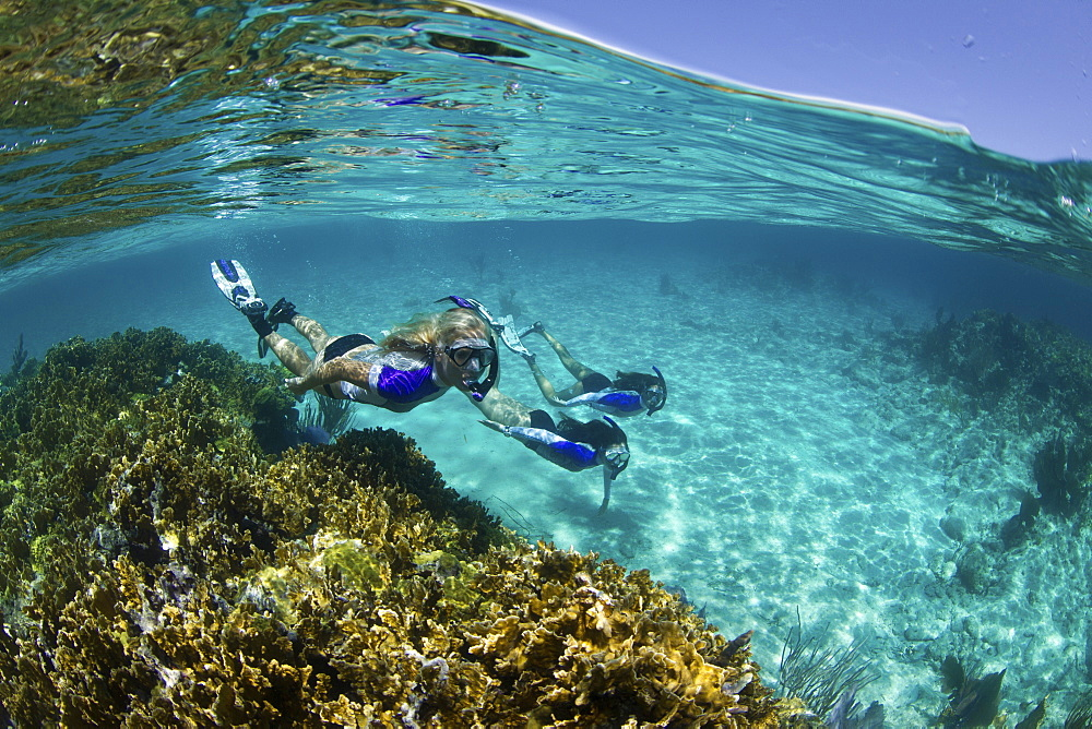 Over/under of three snorkelers underwater on a reef near New Providence, Bahamas - 1174-4678