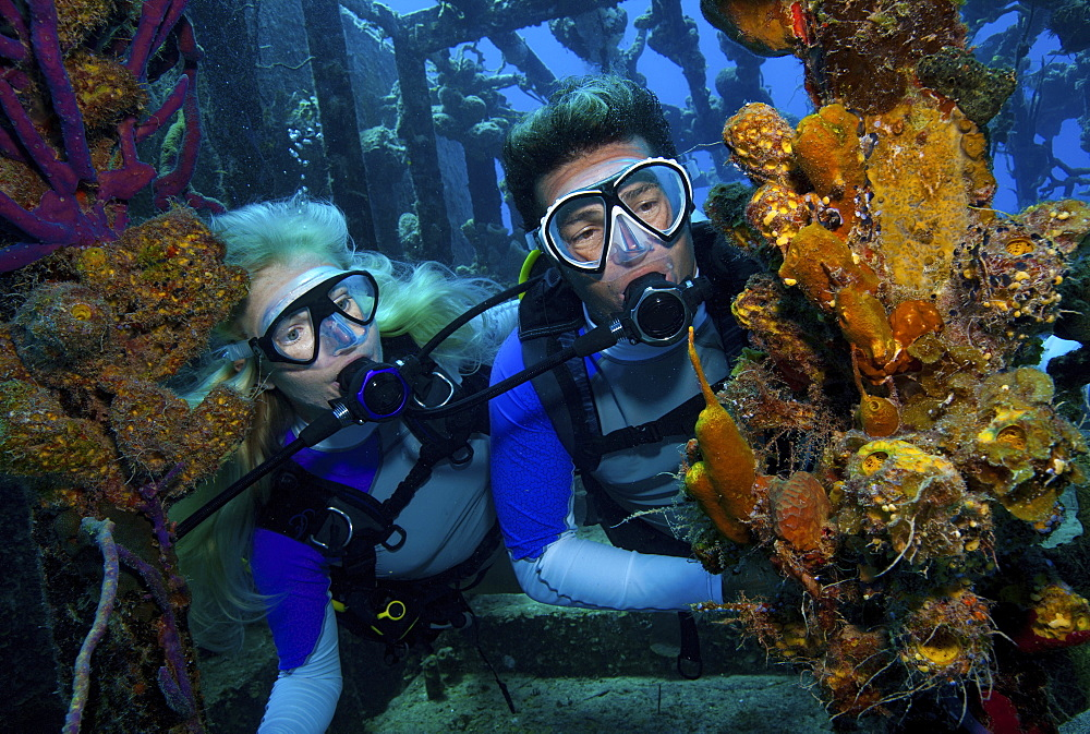 Divers observe marine life attached to the remnants of the hull of a shipwreck dive site.