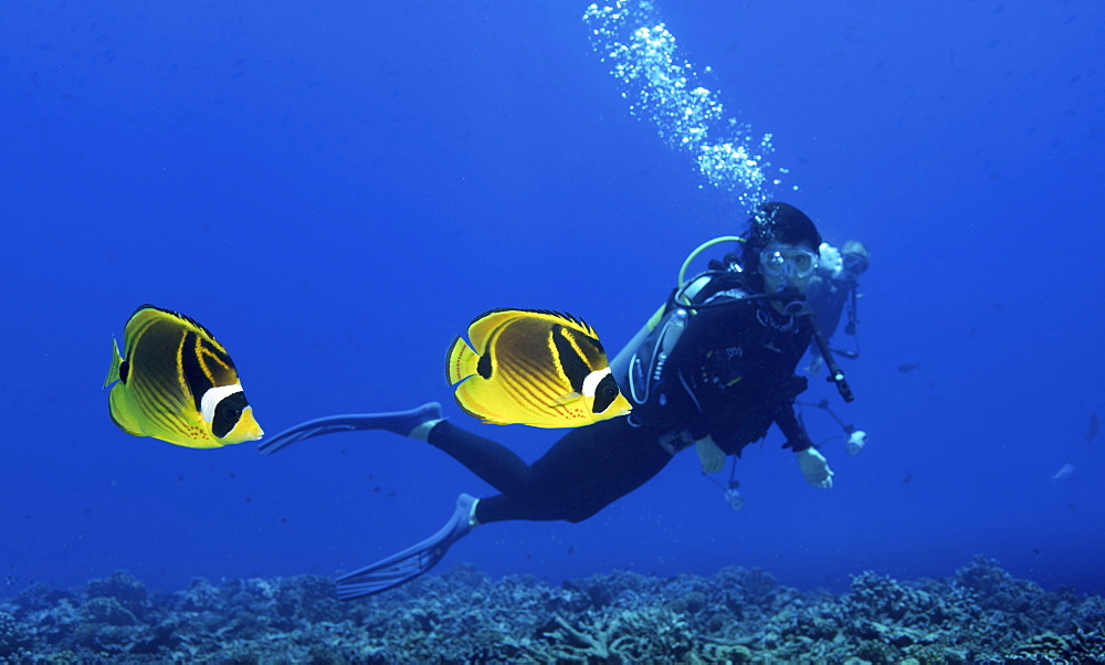 A scuba diver watching a pair of Raccoon butterflyfish in French Polynesia - 1174-4685
