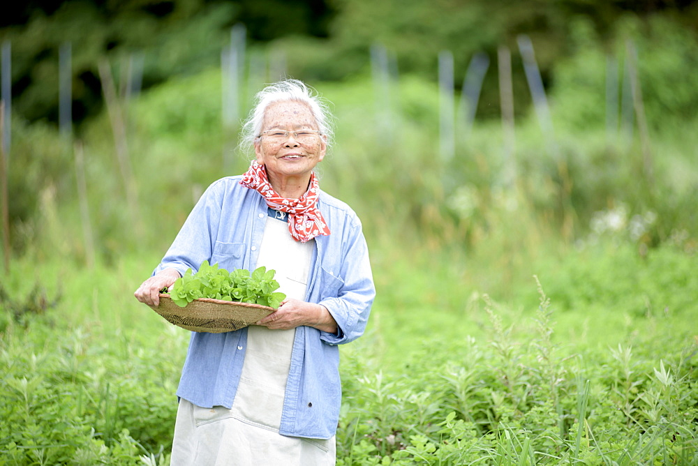 Elderly woman with grey hair standing in a garden, holding basket with fresh vegetables, smiling at camera, Japan - 1174-4758
