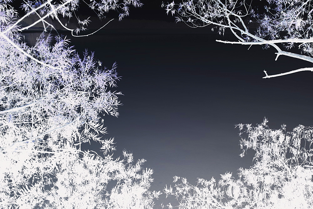 Inverted image of dense willow tree foliage, lake water in background, Green Lake, Seattle, Washington, USA, King County, Seattle, Washington, United States
