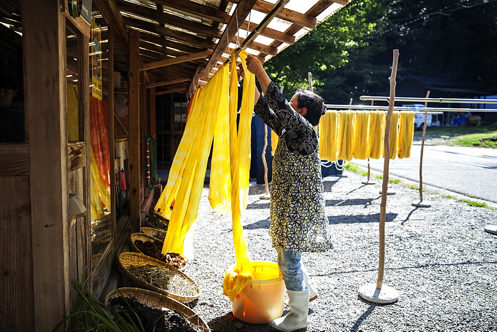 Japanese woman outside a textile plant dye workshop, hanging up freshly dyed bright yellow fabric, Kyushu, Japan - 1174-4855