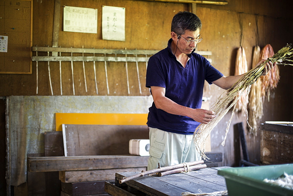 Japanese man in a workshop holding plant twigs and stripping the fibre to making traditional Washi paper, Kyushu, Japan
