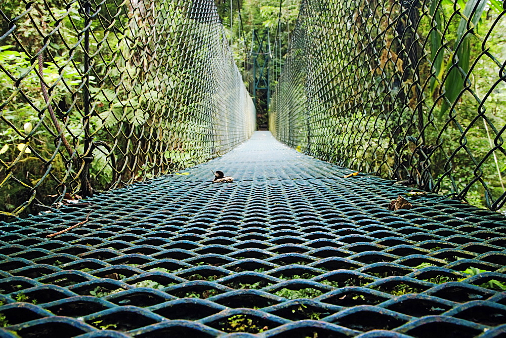 Footbridge in Costa Rican Forest, Costa Rica