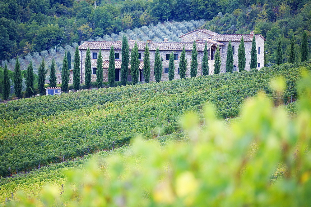 Stone Farmhouse and Vineyard, Panzano, Tuscany, Italy
