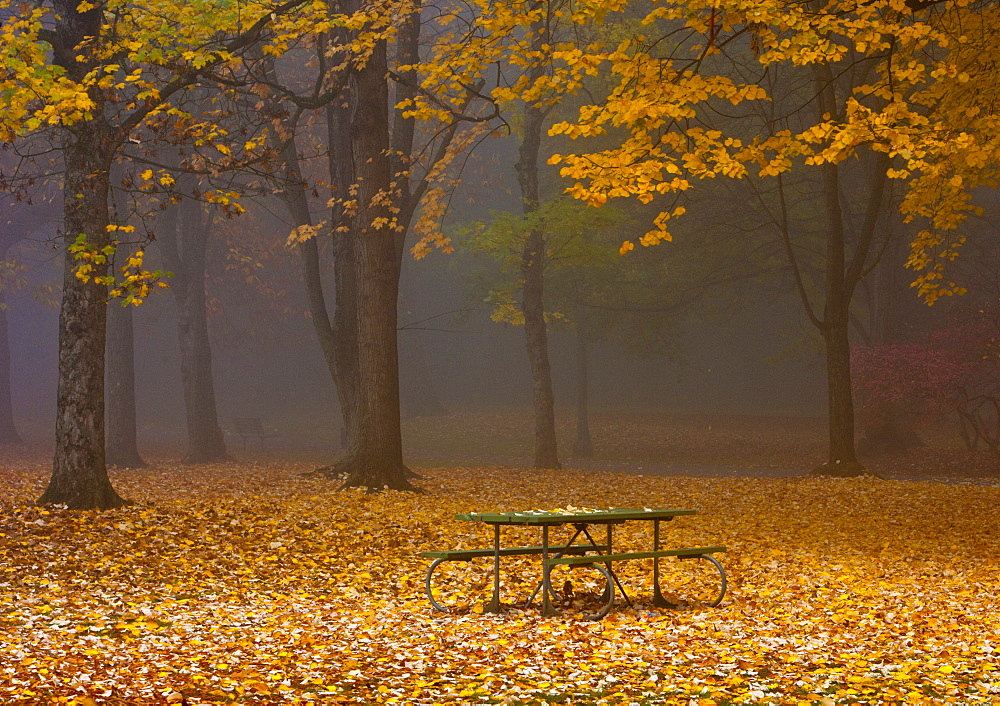 Picnic Table in a Park, Portland, Oregon, United States of America