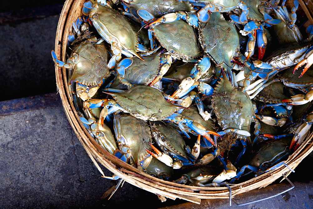 Basket of Crabs, New York City, New York, United States of America