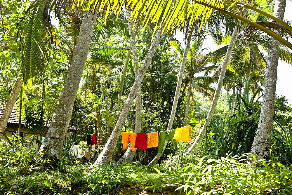 Clothes Drying in a Jungle, Cochin, Kerala, India