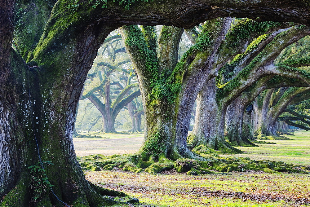 Moss covered trees, Louisiana, USA