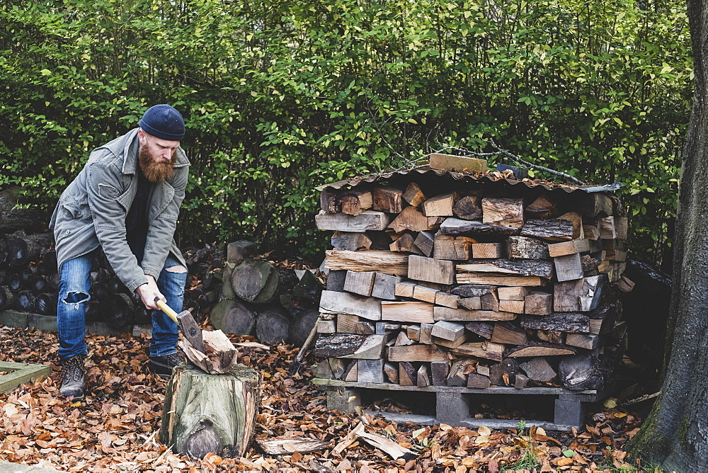 Bearded man wearing black beanie and parka standing in garden in autumn, using axe to chop piece of wood on chopping block, Berkshire, England