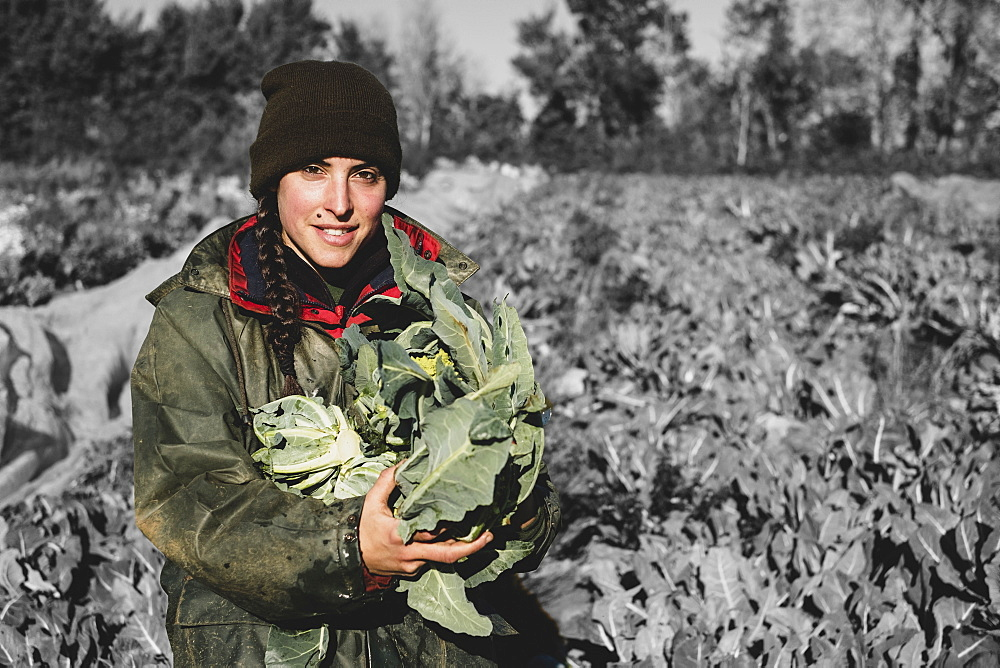 Smiling woman standing in field, holding blue crate with freshly harvested cauliflowers, looking at camera, Oxfordshire, England