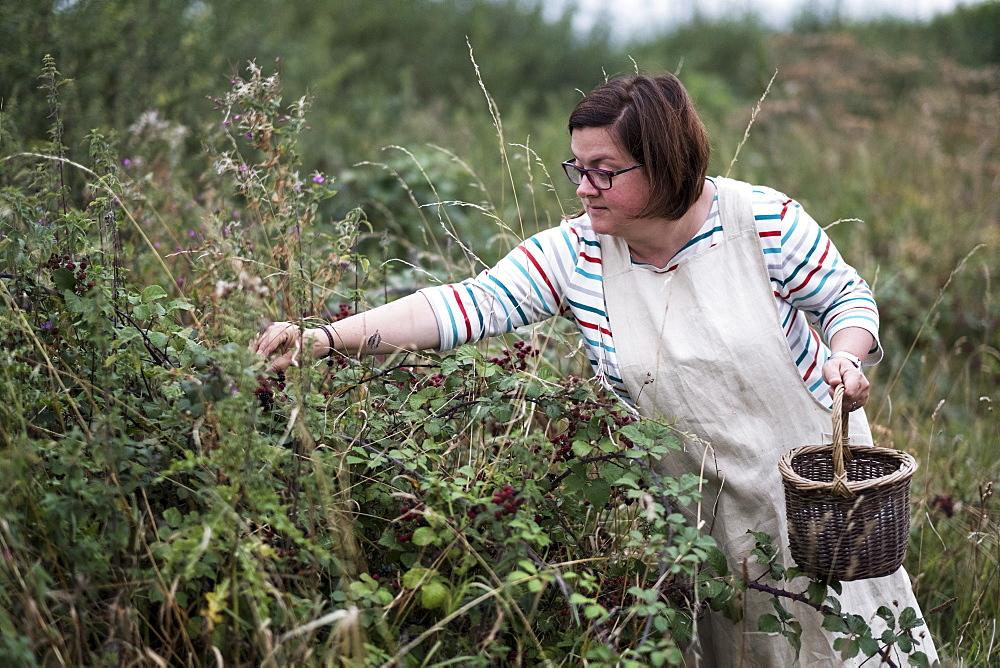 Woman wearing apron holding brown wicker basket, picking blackberries, Oxfordshire, England - 1174-5762