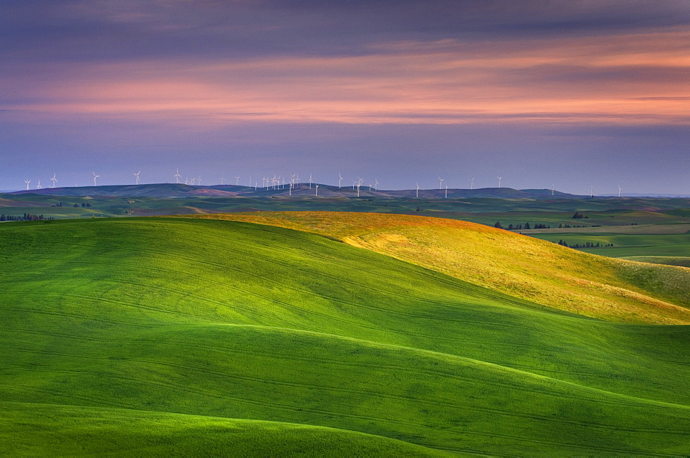 Rolling green hills in rural landscape, Palouse, Washington, USA
