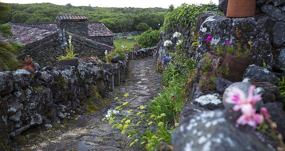 Cobblestone walkway in rural village, Cuada Village, Flores, Portugal