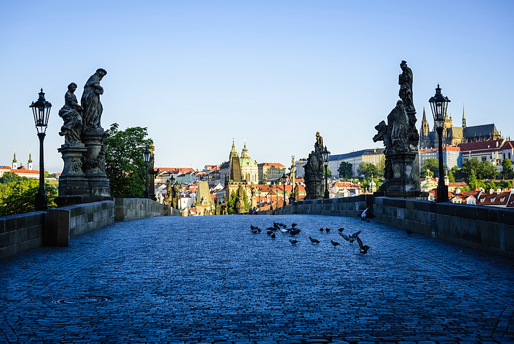 Pigeons on brick path in Prague cityscape, Czech Republic, Prague, Czechoslovakia