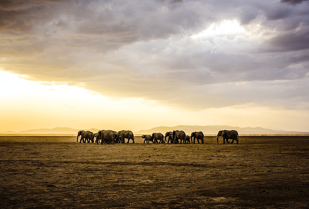 Herd of elephants in savanna landscape, Kenya, Africa