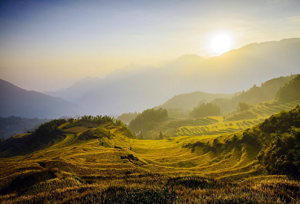 Rice fields in rural landscape, Lishui, Zhejiang, China