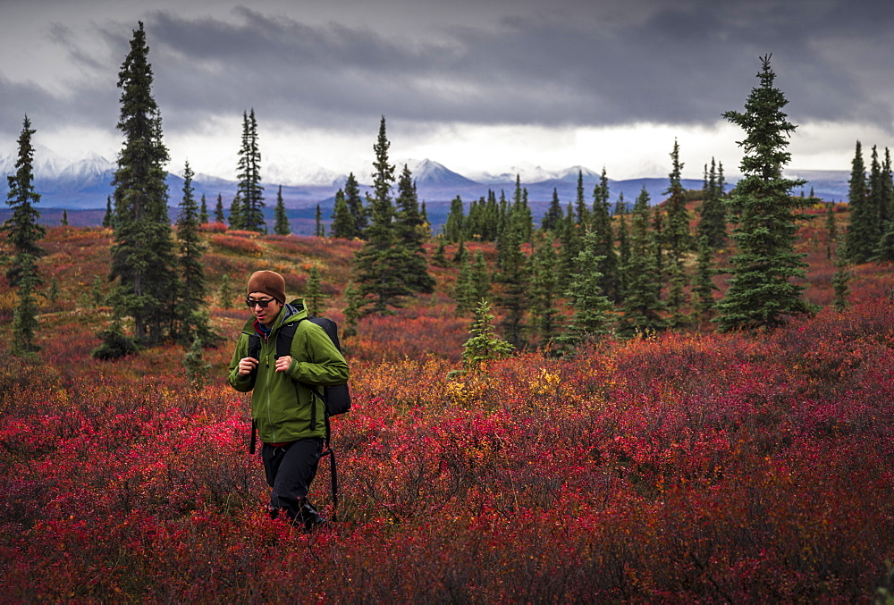 Asian man hiking near trees in landscape, Denali, Alaska, USA