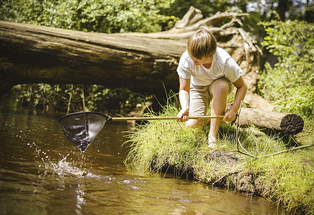 A boy kneeling by the river bank, leaning over and using a small fishing net, Hampshire, England