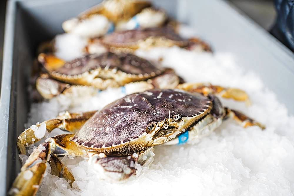 Group of fresh caught crab shellfish on ice at a fish market