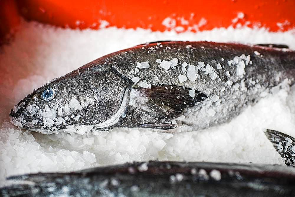 Two fresh fish on a fish market stall on ice