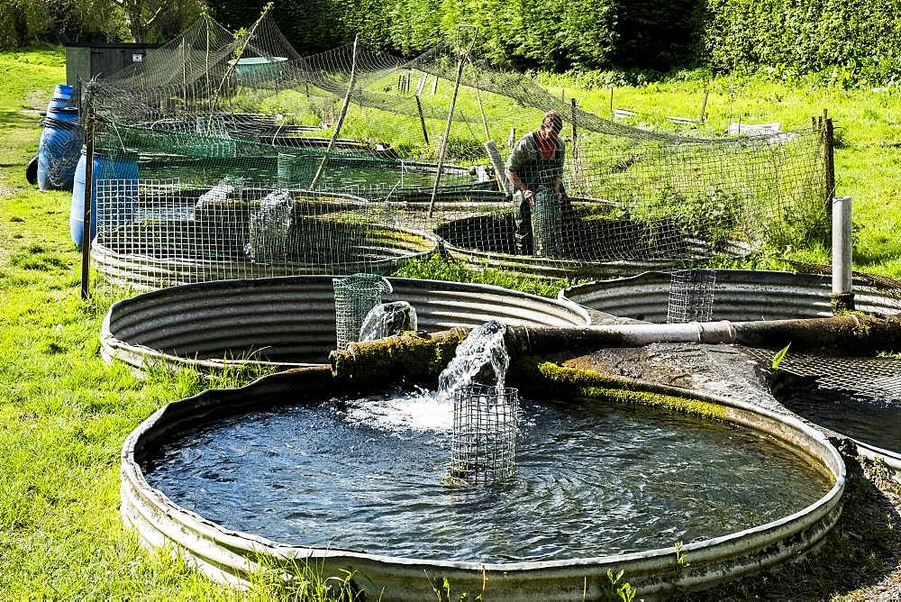 High angle view of man wearing waders working at a water tank at a fish farm raising trout