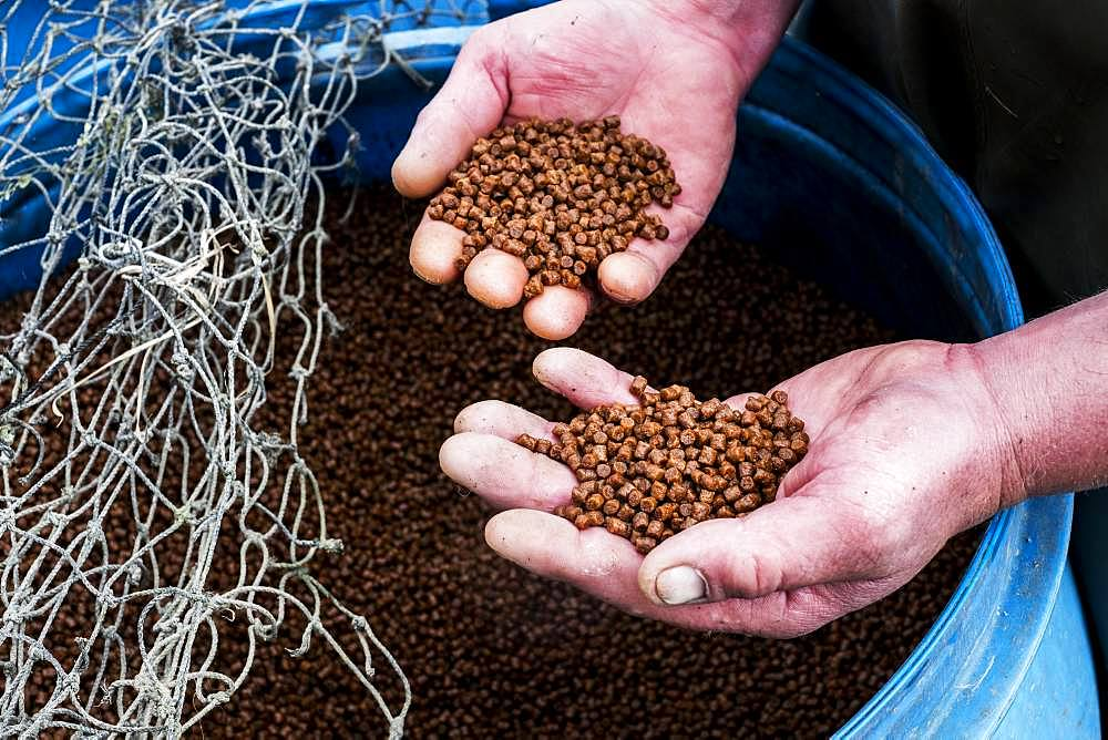 High angle close up of person holding heap of brown pellets, fish food at a fish farm raising trout