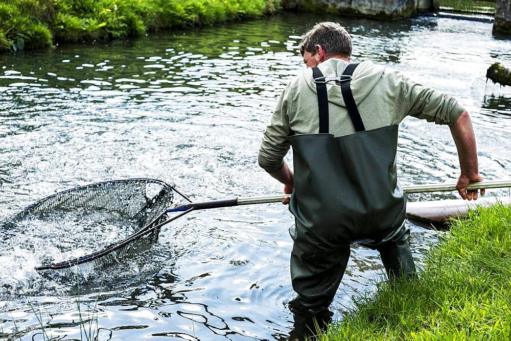 Man wearing waders standing in a river, holding large fish net with trout