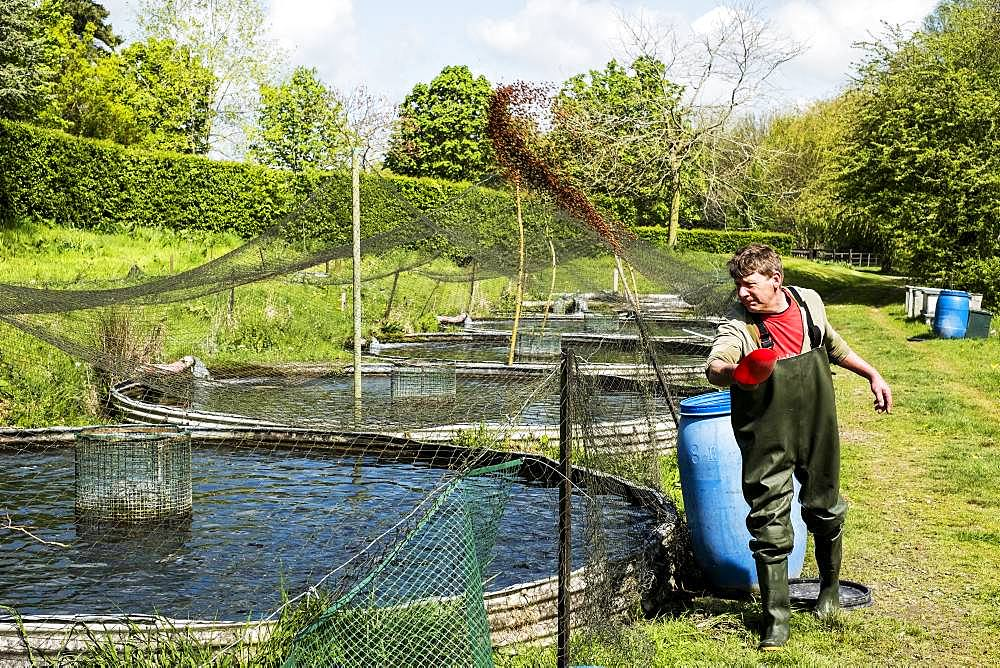 Man wearing waders standing next to water tank at a fish farm raising trout, feeding fish - 1174-6718