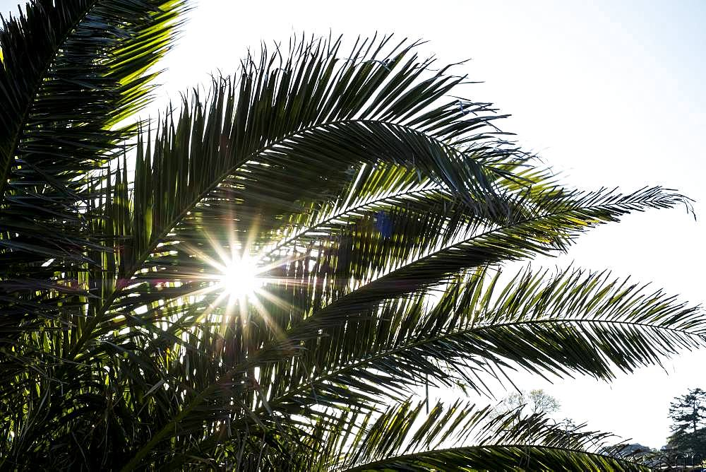 Close up of sunlight filtering through the leaves of a palm tree