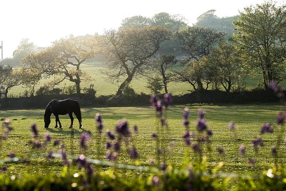 Horse grazing on a paddock with trees and field in the background