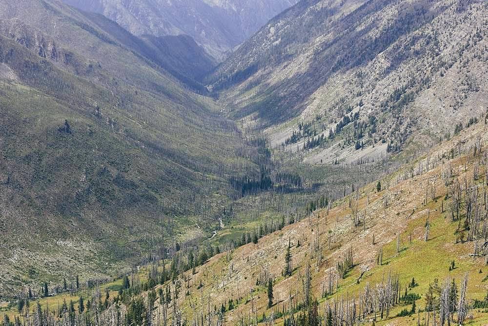 Mountainous forest and valley where a massive fire burned and now regrows, along the Pacific Crest Trail near Hart's Pass, Pasayten Wilderness, Okanogan-Wenatchee National Forest, Washington
