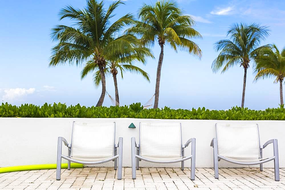 Pool chairs and palm trees, Grand Cayman, Cayman Islands