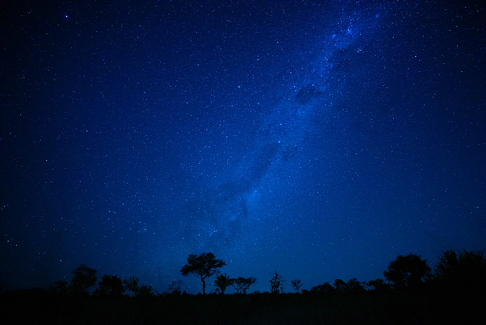 A landscape shot at night, silhouetted trees in the foreground and the Milky Way and stars in the background, Londolozi Game Reserve, Sabi Sands, Greater Kruger National Park, South Africa - 1174-7134