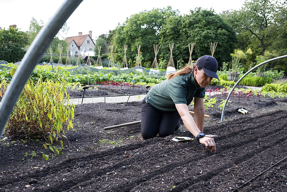 Woman kneeling in a vegetable bed, sowing seeds