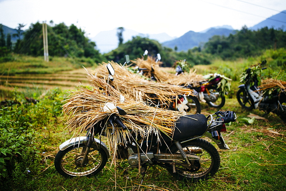 Motorbikes laden with rice stalks in the northern mountains of Vietnam, Vietnam