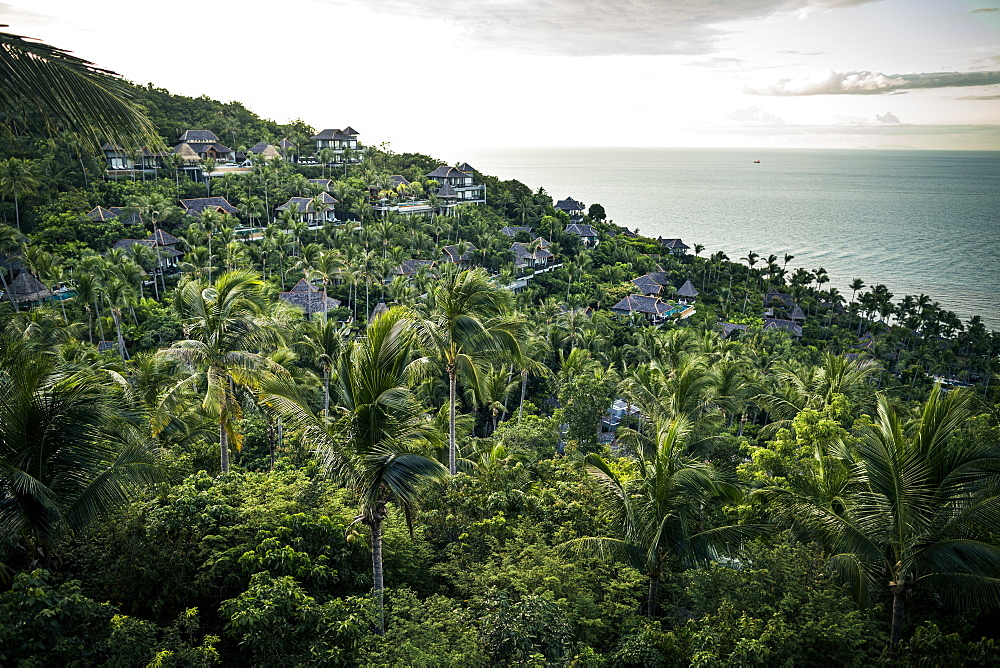 View across dense forests and coconut trees with ocean in the distance, Thailand