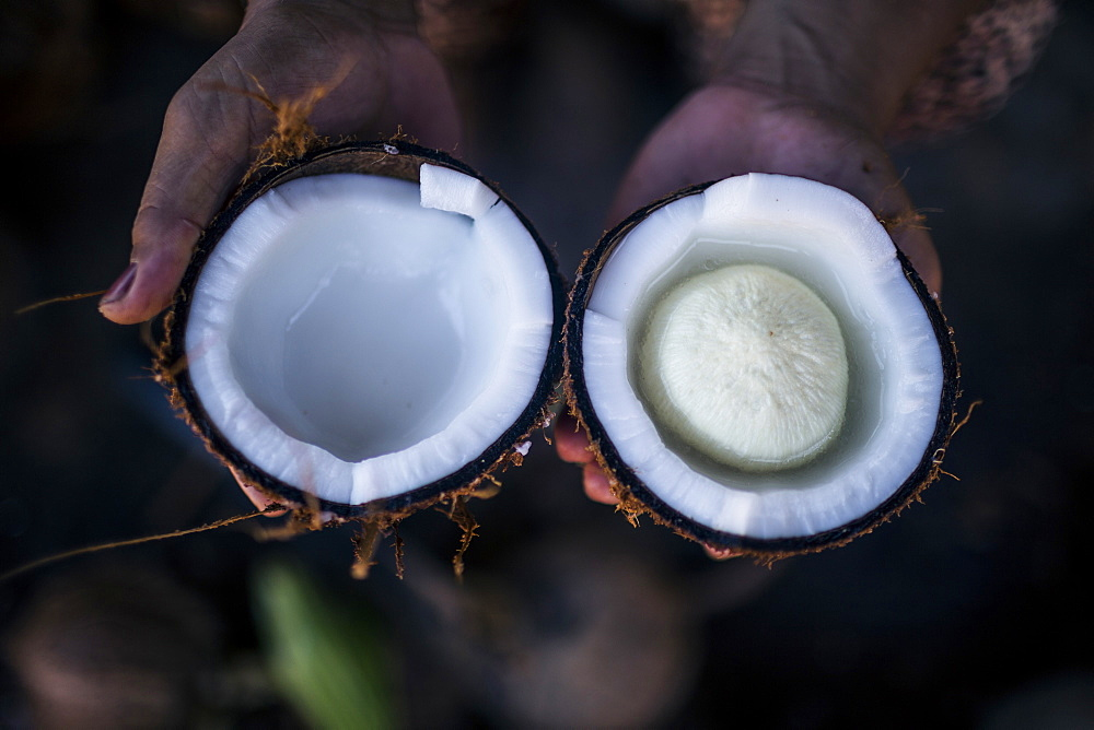 """High angle close up of hand holding young coconut with a """"seed"""" inside, Thailand"""