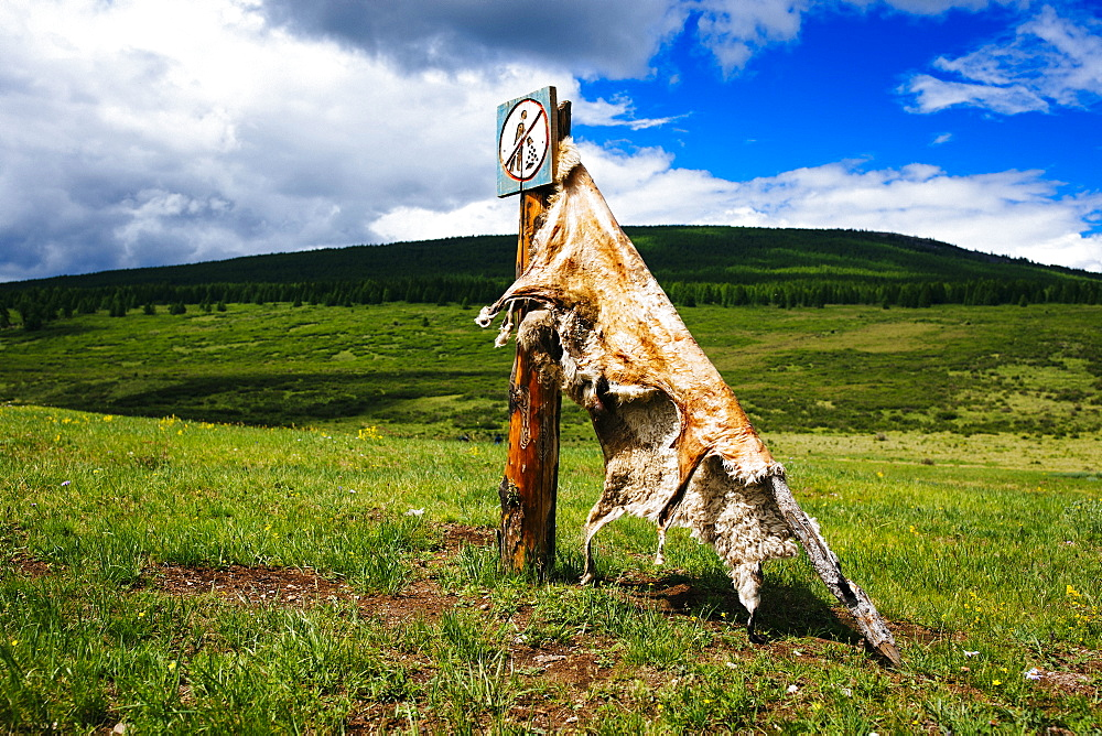 Close up of sheep hide stretched out to cure on a mountainside, Mongolia