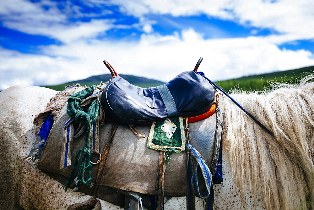 Close up o saddle on white horse, cloudy sky, Mongolia