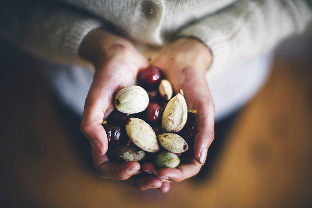 High angle close up of hands holding cherries and almonds