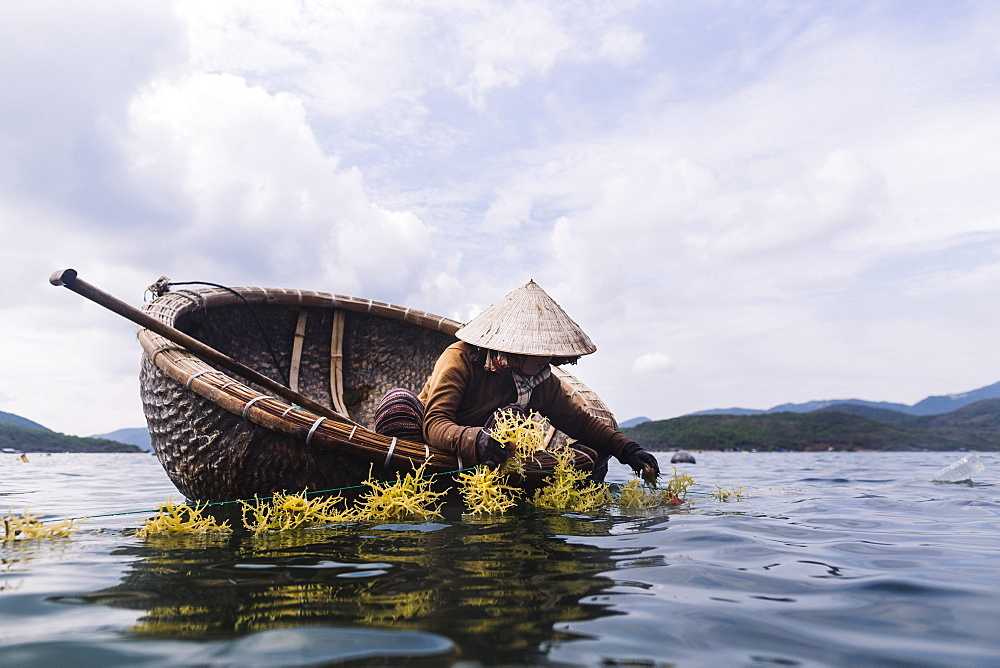 Woman wearing straw hat farming seaweed from a small wooden boat, Vietnam - 1174-7535