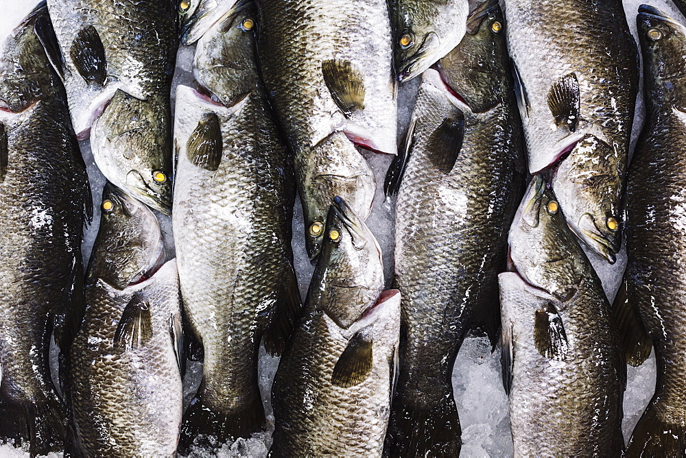 High angle close up of barramundi on ice ready to be cut into portions, Vietnam