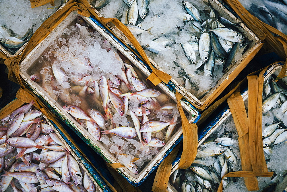 High angle close up of crates with small fish on ice, Indonesia