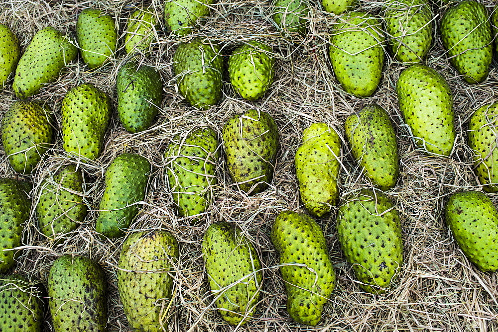 High angle close up of fresh green soursop fruit for sale at a market, Vietnam