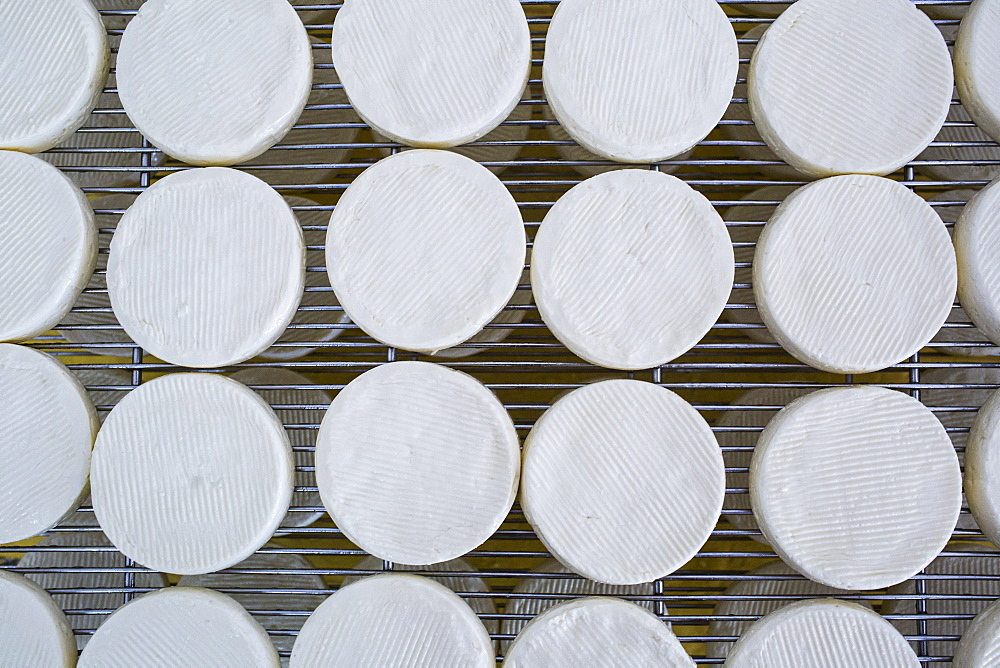 High angle close up of cheese-making, Camembert cheese drying in cool storage on wire racks, Vietnam