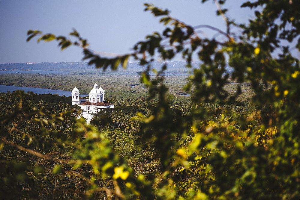 Landscape with tree branch in foreground and cathedral in the distance, India
