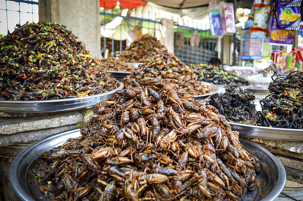 Food market in Cambodia, close up of trays with heaps of a selection of deep fried exotic insects, Cambodia