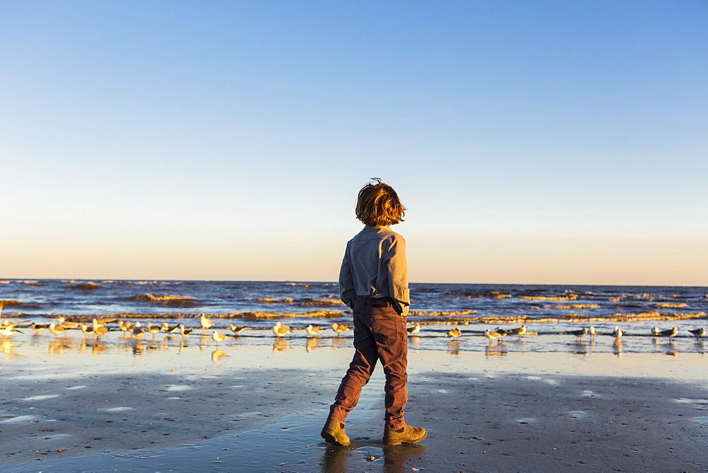 A boy walking on a beach, flock of seagulls on the sand, St Simon's Island, Georgia, United States